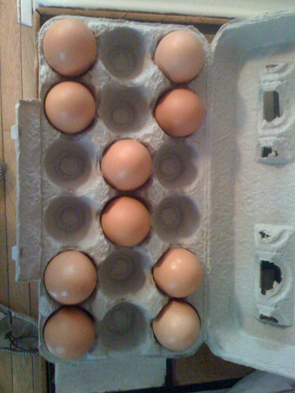 Cambridge, MA :: I have this weird thing with eggs in the carton where I have to organize them in such a way where they have to be all balanced nice style!!!