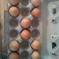 I have this weird thing with eggs in the carton where I have to organize them in such a way where they have to be all balanced nice style!!!