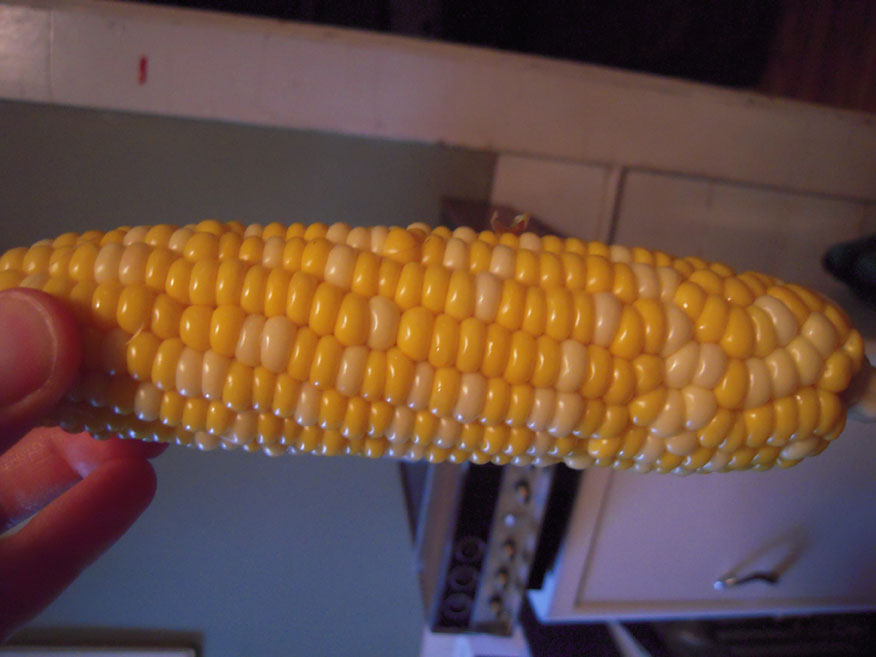 My house Cambridge, MA :: corn on the cob on 06.14.09... it sucked real bad.... did not finish it.... I was happy to waste this food item!!!!!!!!! wait till the corn does not taste like garbage... try summer time!!!