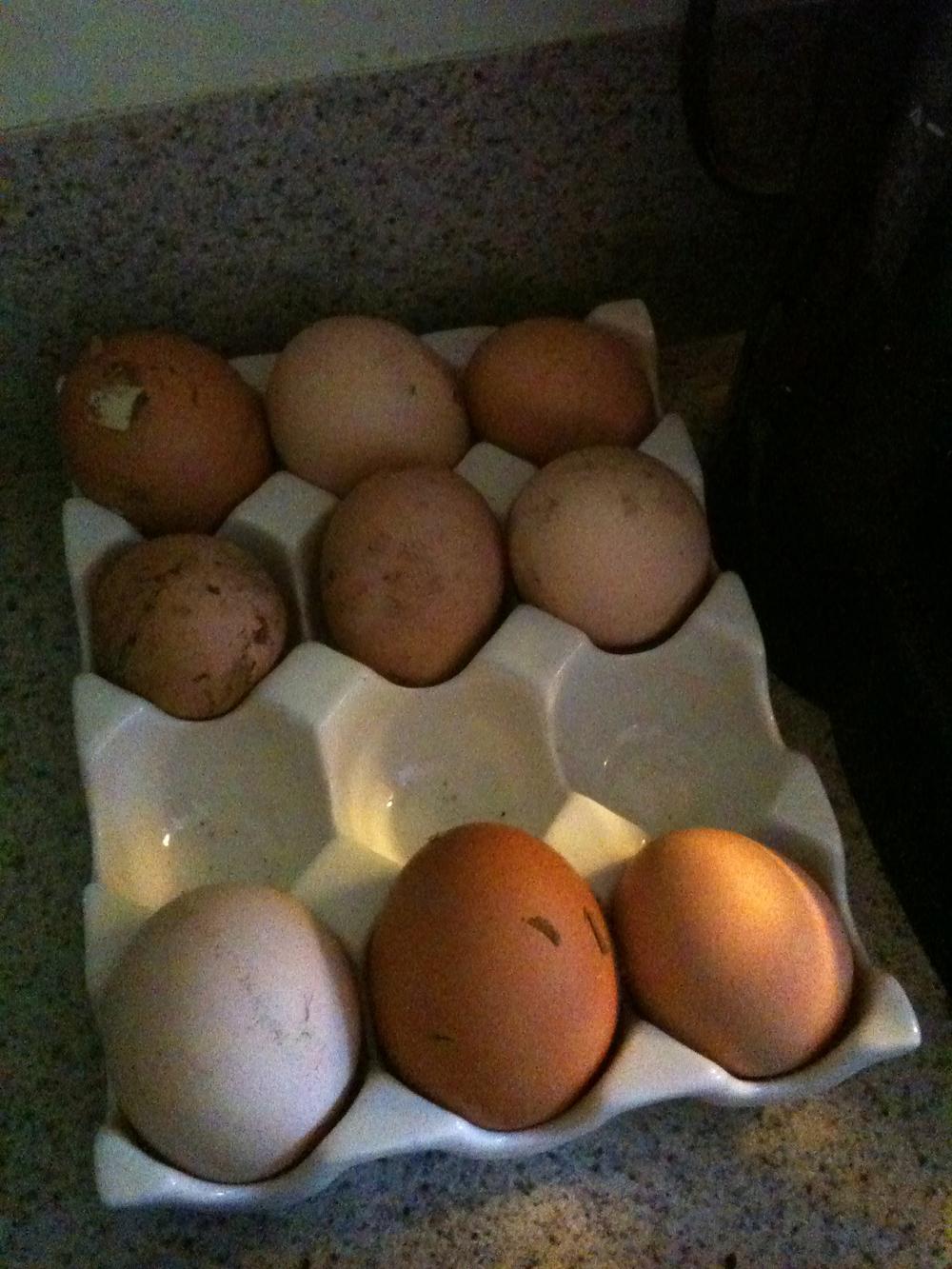 Farm :: Farm fresh eggs